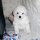Hvalp, født januar 2011